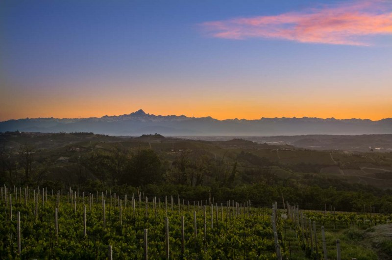 Sunset view of Mt. Viso over the vineyards near Treiso, Piedmont, Italy