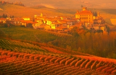 8601_barolo_fall_w