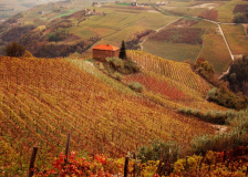 Autumn vista of iconic hills covered with vines in Piedmont, Italy.