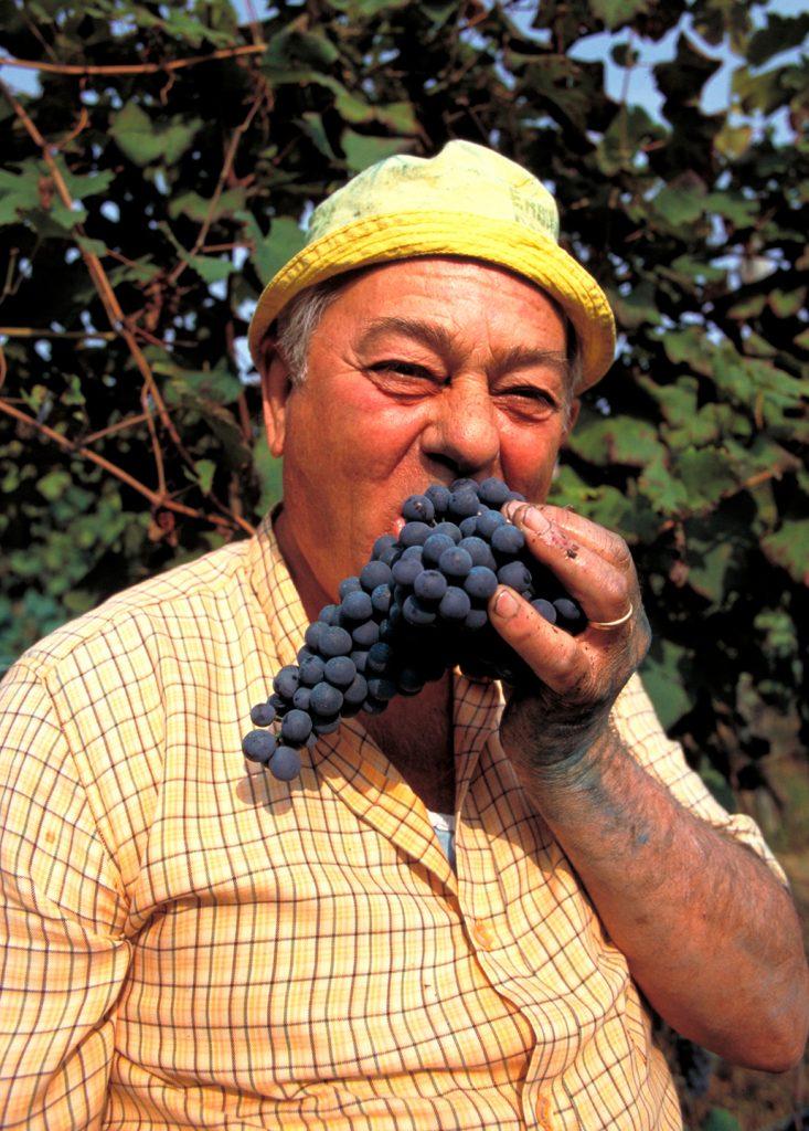 grape, picker, harvest